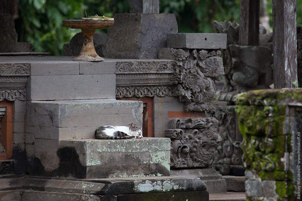 Котик на Бали